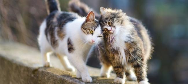 Una Multa Se Non Sterilizzi Il Gatto La Proposta Shock Contro I