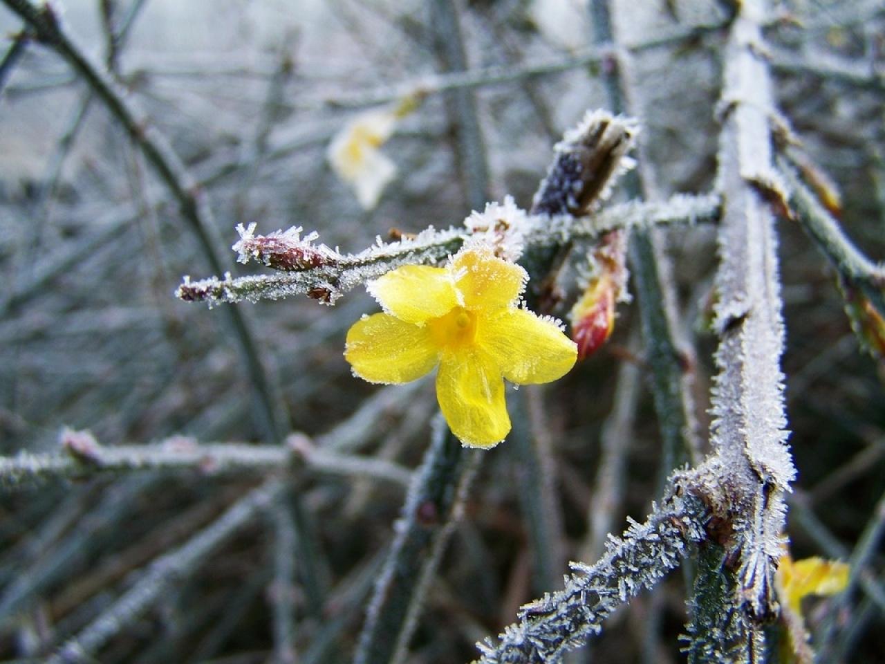Come Curare Le Piante come curare le piante d'inverno - ticinonline