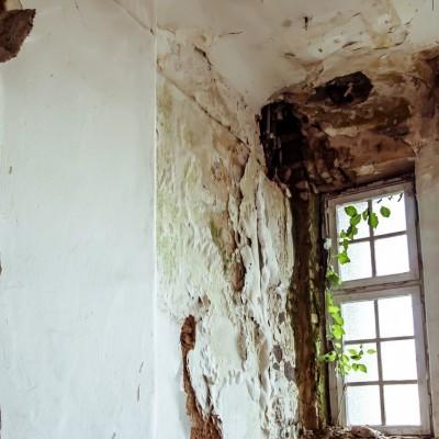 Ticinonline Muffa In Casa E In Azienda Ecco Come Combatterla