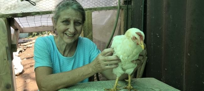 Grande cazzo gallina