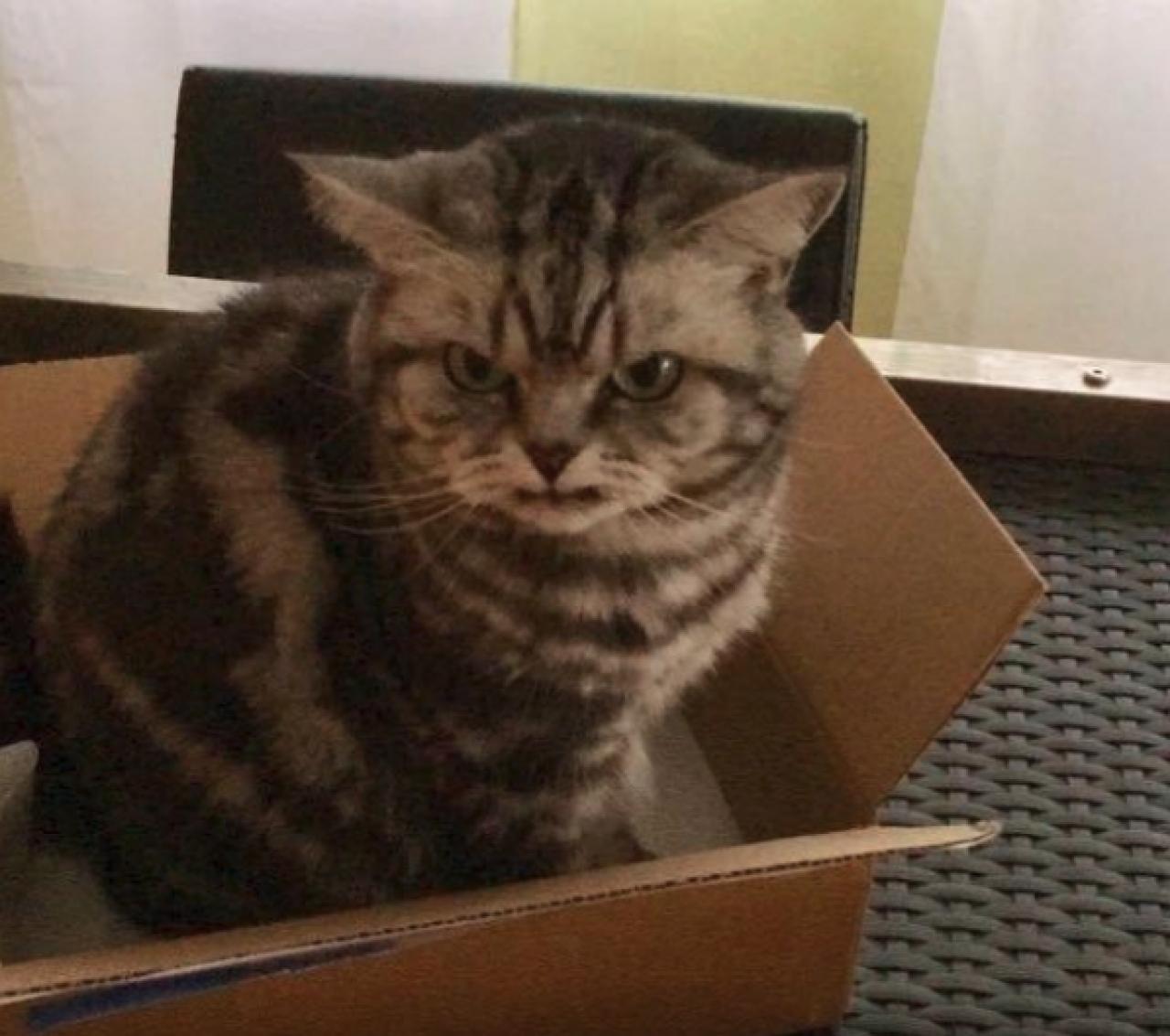 Ticinonline Questo Gatto Non è Arrabbiato