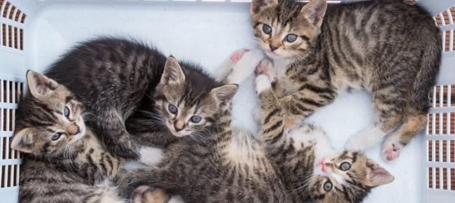 Ticinonline Lunafilou La Campagna Per La Castrazione Del Gatto