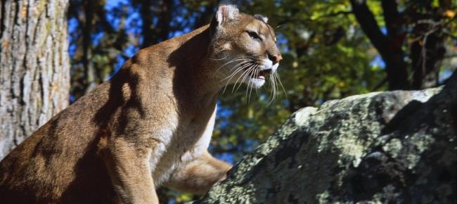 sito di incontri Australia Cougar