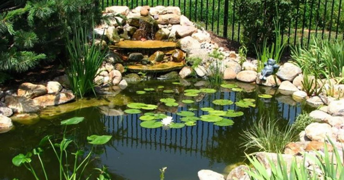 come costruire uno stagno nel proprio giardino di casa