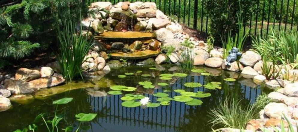 Come costruire uno stagno nel proprio giardino di casa for Costruire uno stagno