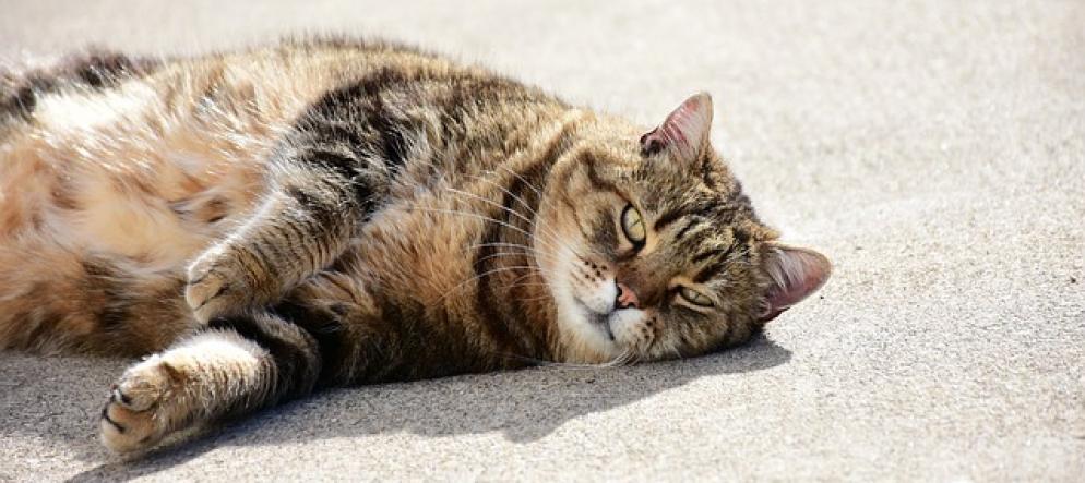 Come Vivere Con Un Gatto Pur Soffrendo Dallergia Ticinonline