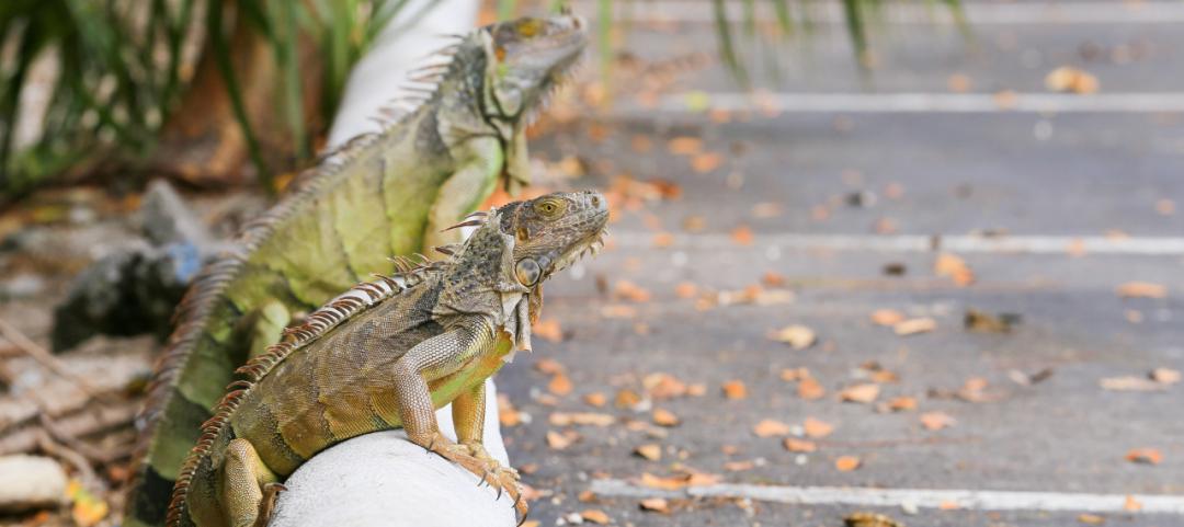 Università di Florida sito di incontri