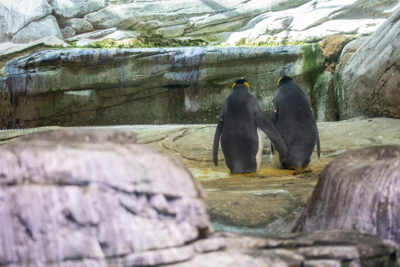 Sito Web di incontri pinguino