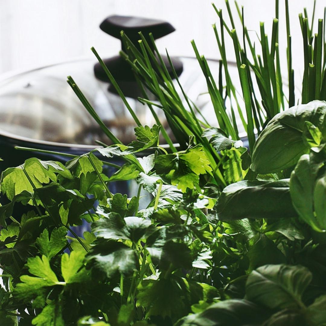 Rosmarino Secco Alla Base così il vostro giardino delle erbe aromatiche sopravvive all