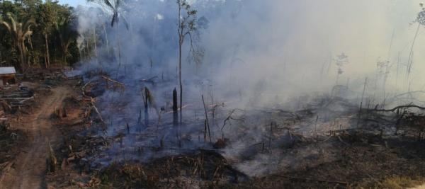 UBS e Credit Suisse «contribuiscono alla distruzione dell'Amazzonia»